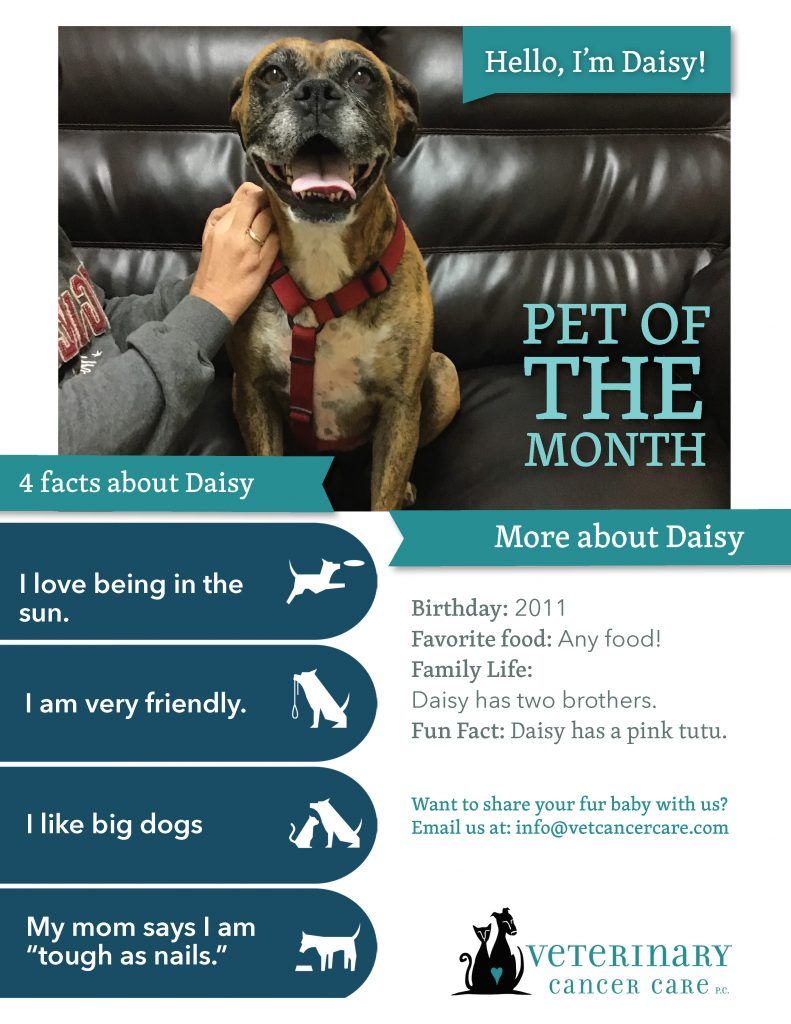 Pet of the Month Daisy