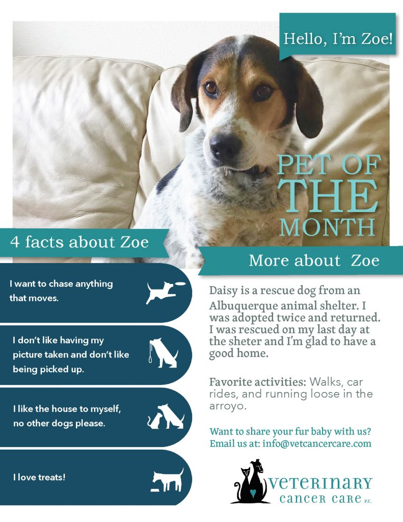 Pet of the Month Zoe