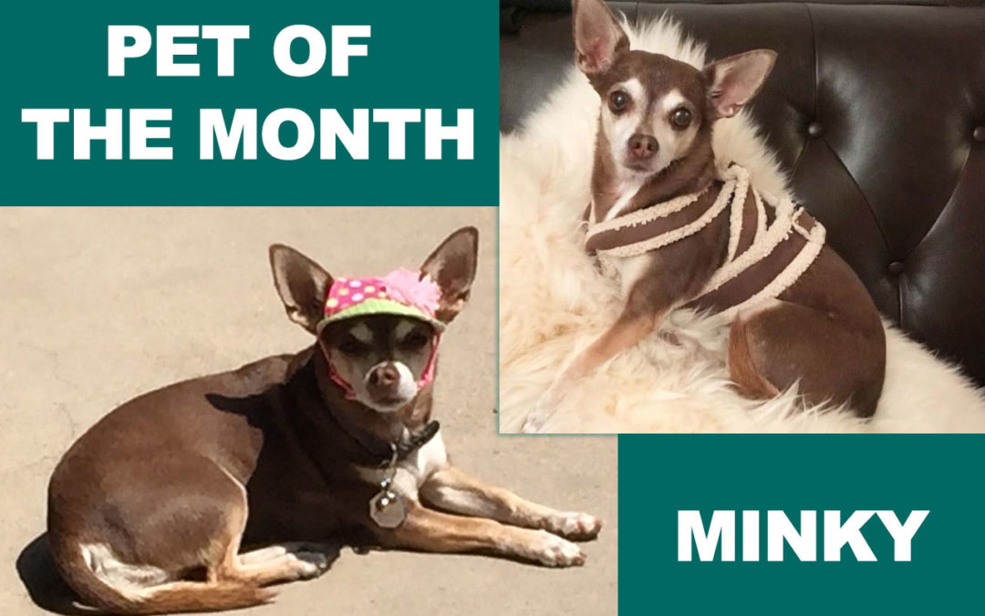 July Pet of the Month Minky